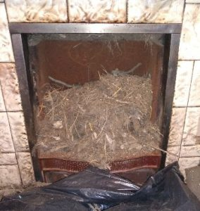 Bird Nest Debris
