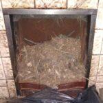 Bird Nest Debis
